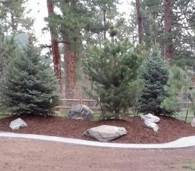 tree planting landscaping denver